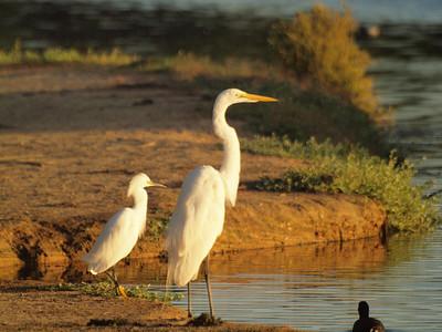 Los Cabos Birds