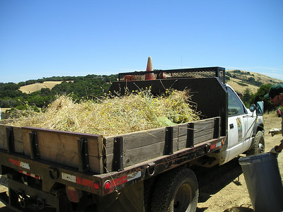 The Open Space truck with our final accumulation of thistle.