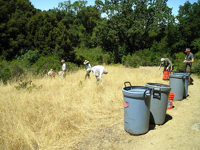 More seeking, more pulling, more bending over. We filled several trash cans with thistle. But, really, it was pretty sparse in most of the areas we worked, because they've been doing this for years here.