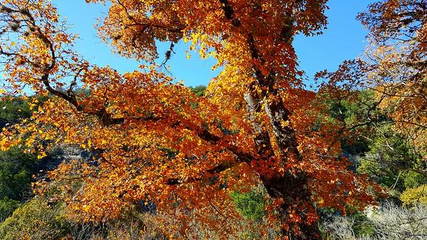 Lost Maples State Natural Area & San Antonio River Walk