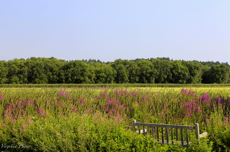 Beautiful morning hours at the Meadow - Wednesday July 23rd, 2014