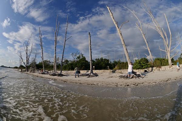 Photographers roaming the beach