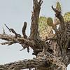 2016_ desert tree and cactus_ Bentsen- Rio Grande SP_ LRGV TX_IMG_2141