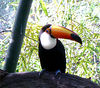I couldn't decide which tucan picture I liked the best so I put three of them in.  Just wait until you get to the elephants!!