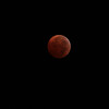 [Filename: lunar eclipse 5dmII-685.jpg] <br />  Copyright 2010 - Michael Blitch Photography