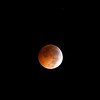 [Filename: lunar eclipse xsi-122.jpg] <br />  Copyright 2010 - Michael Blitch Photography