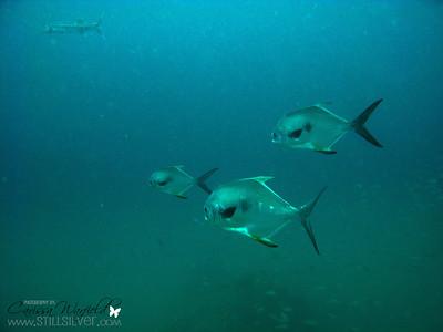 M5 - Sarasota Dive