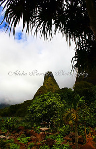 IAO NEEDLE VALLEY (KUKAEMOKU)
