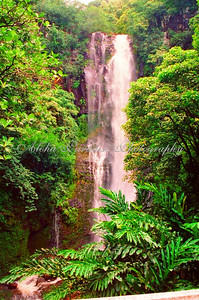 MAUI WATERFALL ALONG HANA HIGHWAY