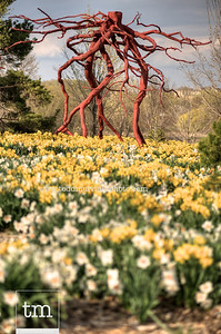 A Steel Roots sculpture is nestled into a field of daffofils.