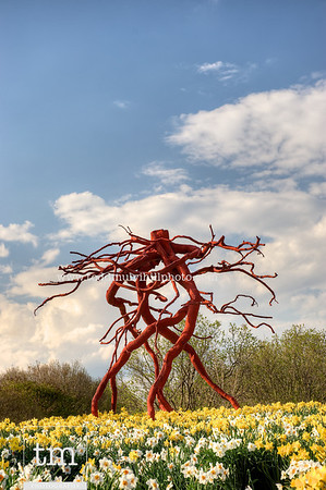 A Steel Roots sculpture towers above a daffodil field.