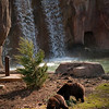 Grizzly Bear Exhibit with 20 foot waterfall as part of compound.