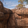 Leopard Exhibit.  Due to the power of this animal to climb and jump it is incased but note the size of the enclosure and the way it was design to meet the needs of the Leopard natural habit.