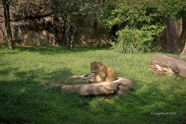 Relaxing in the sun.