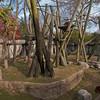 Orangutan Enclosure.