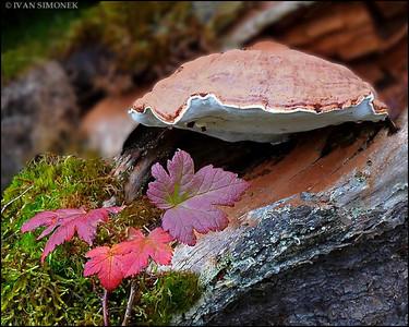 """CONK"",Wrangell,Alaska,USA."