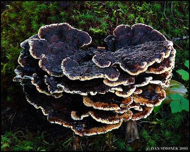 """""""IN A RAIN FOREST 1"""", Wrangell, Alaska, USA-----""""V DESTNEM PRALESE 1""""."""