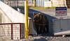 Alaska Guard Dog