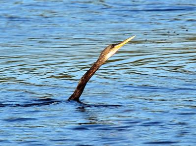 MacDill AFB birds