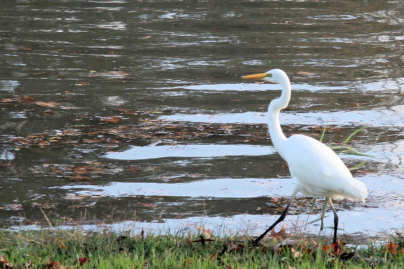 Then it walked upstream.