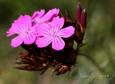 Macro Flora;