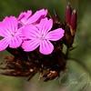 Macro Flora