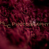 HLC_4256