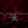 HLC_8671