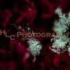 HLC_8680