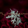 HLC_8633