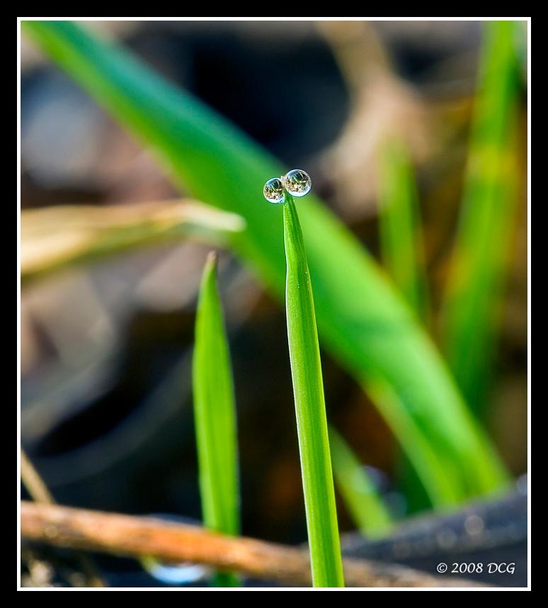 IMAGE: http://amtphoto.smugmug.com/photos/283918388_wbjWS-X2.jpg