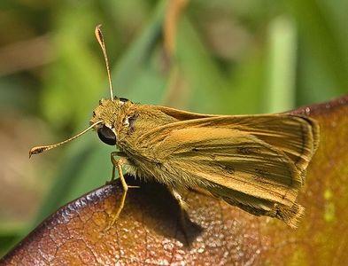 More Bug Macros