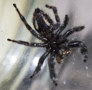 Spider ID wanted