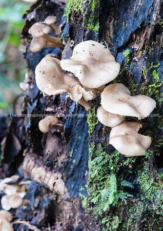 White mushroom growing on tree.