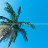 Palm tree against sky