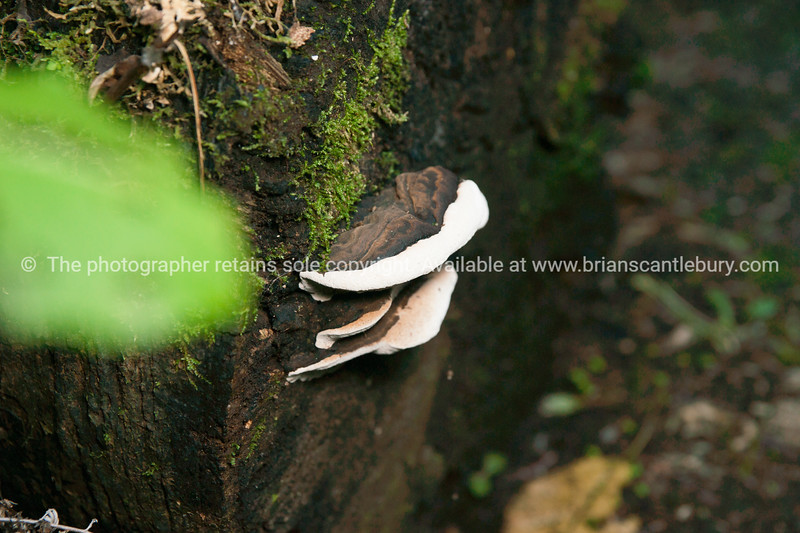 Funghi on tree