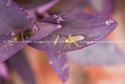 Beetle on petal.
