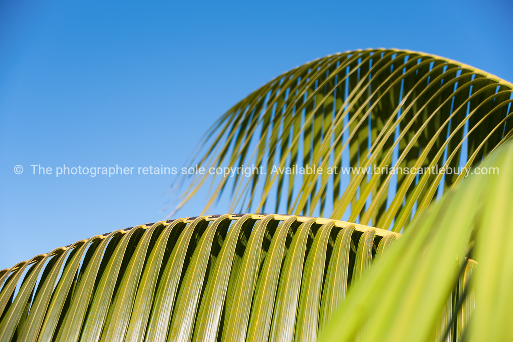 Palm fronds (2 of 7)