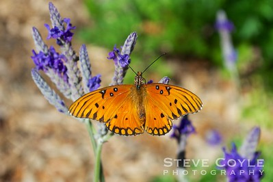 We have butterflies in February in Texas. Hard for me to believe that sometimes.