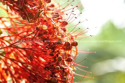 Bright orange cluster of flower, unknown variety.