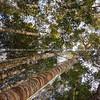 Brick Bay Winery Nature Trails