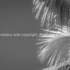 Palm frond against sky