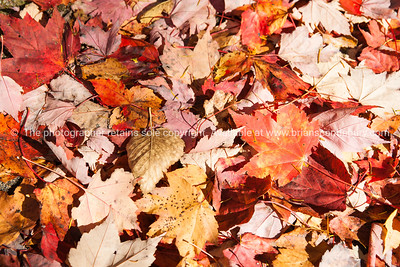 Fall colors, leaves fallen form pattern.