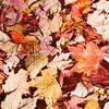 Fall colors, leaves fallen form pattern.
