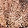 Brown grass.