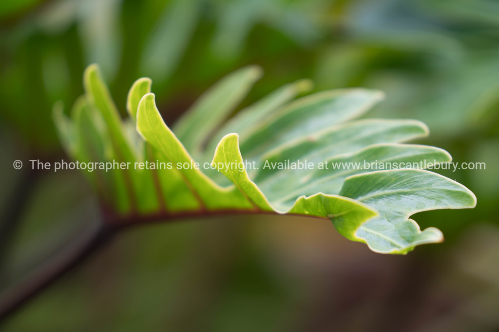 Green leave form
