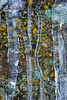 Lichens & Icicles