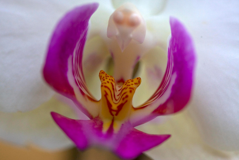 macro shot of an orchid - different world