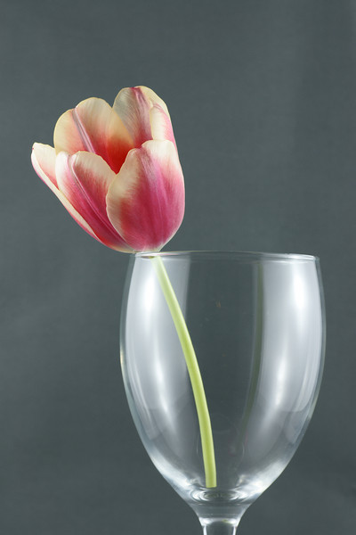 Tulip in wine glass.