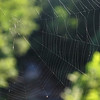 Spider web - Camp Daniel Boone near Canton, NC - Summer 2012